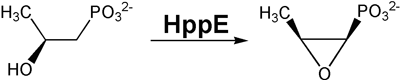 HppE-catalyzed formation of fosfomycin